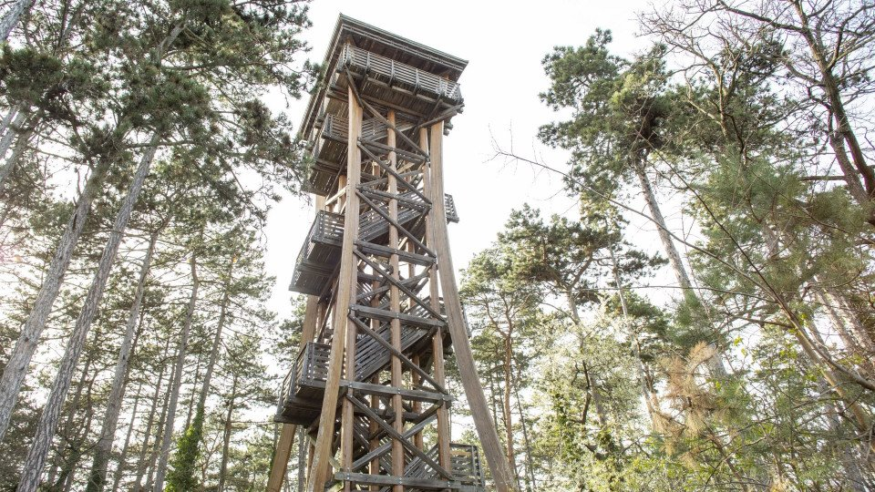Sörházdomb (Beer Hill) Lookout Tower